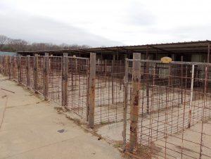 Small Animal Stalls