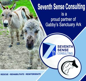 Seventh Sense Consulting